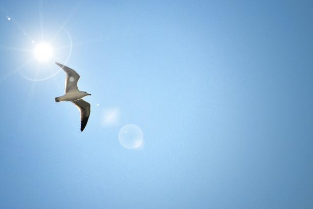 160810_大空と鳥